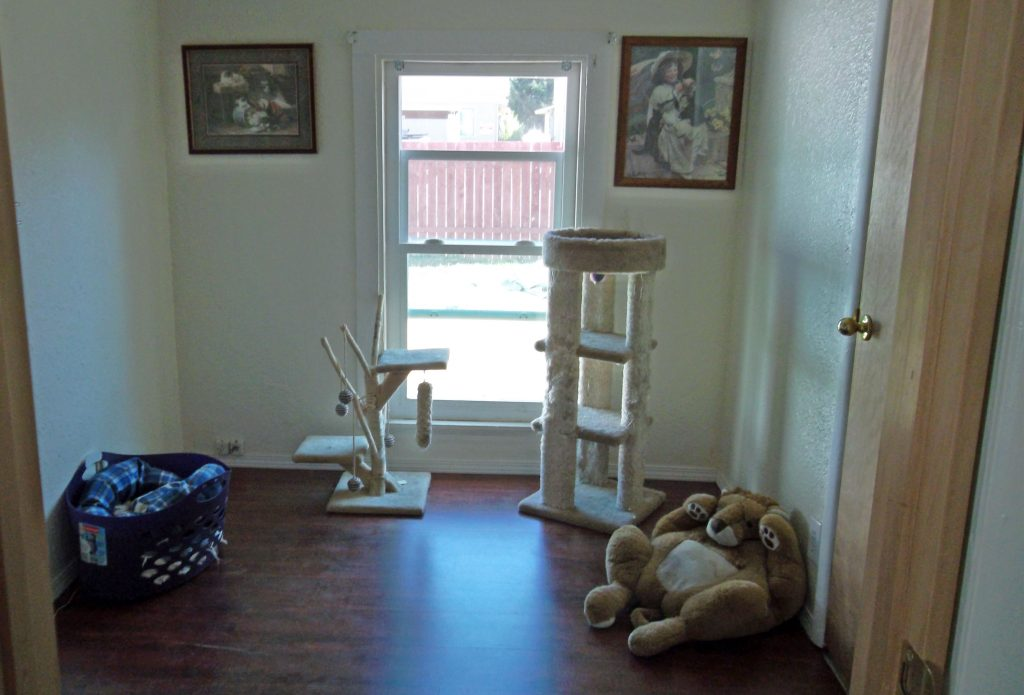Photo of cat play room